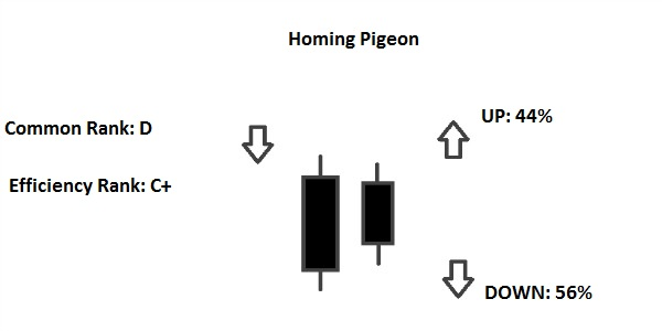 homing pigeon pattern